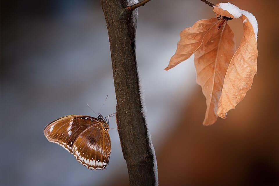 Schmetterling-NEU